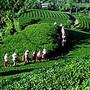 农业产业信息交流群 88124731