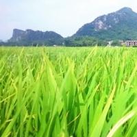 大良村风景