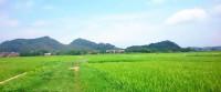 大良庄风景