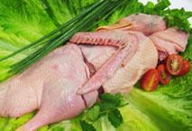 批发生鲜鸭肉(冷冻)