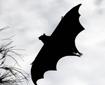 大甫傻创业网:爪爪奇图吧——恐怖的蝙蝠