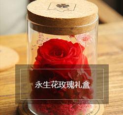 玫瑰花苗盆栽迷你玫瑰 荷兰进口玫瑰花苗带花含盆包邮植物花 粉色