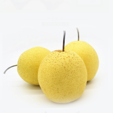 河北雪花梨4个约5斤 新鲜水果梨子 赵州特产雪梨