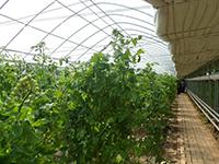 甘肃——PC透明瓦温室塑大棚,日光温室建