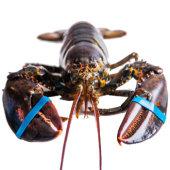 鲜动生活 加拿大活龙虾450g-560g
