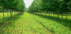 园林公司基地实景