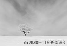 白志海(119990593)