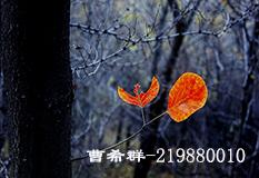曹希君(219880010)
