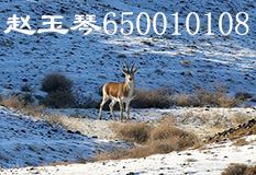 赵玉琴(650010108)
