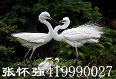 张怀强(419990027)