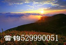 雷钧(529990051)