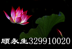 顾永生(329910020)