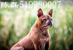陈磊(519980007)