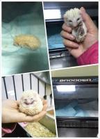 稀有动物治疗