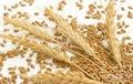 燕麦片成套生产线