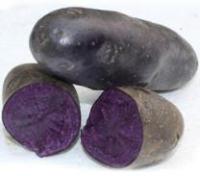 银河实业紫土豆