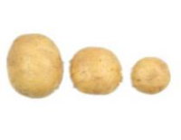 银河实业土豆