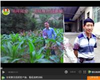 银河实业茅台镇纯天然白酒生产基地现场视频