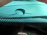 南京福克斯汽车玻璃修补效果对比