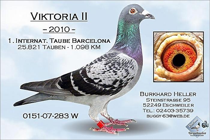 VIKTORIAII DV0151-07-283 2010年冠军.jpg