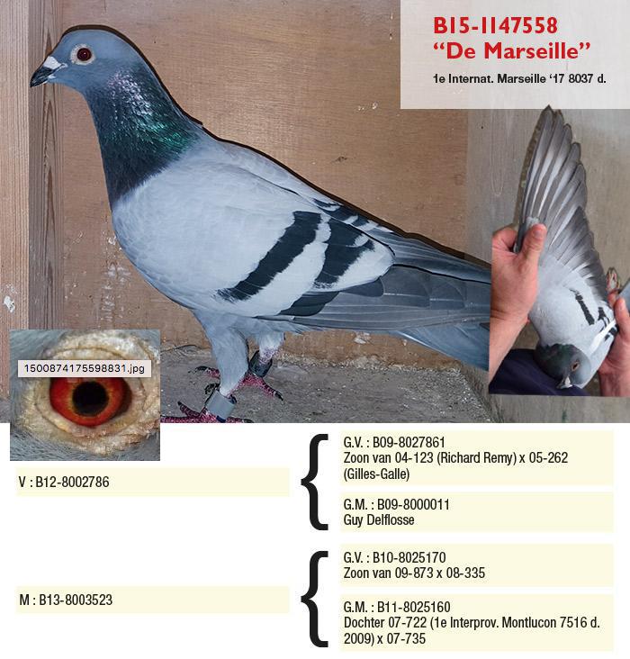 Charlier Etienne17年冠军.jpg