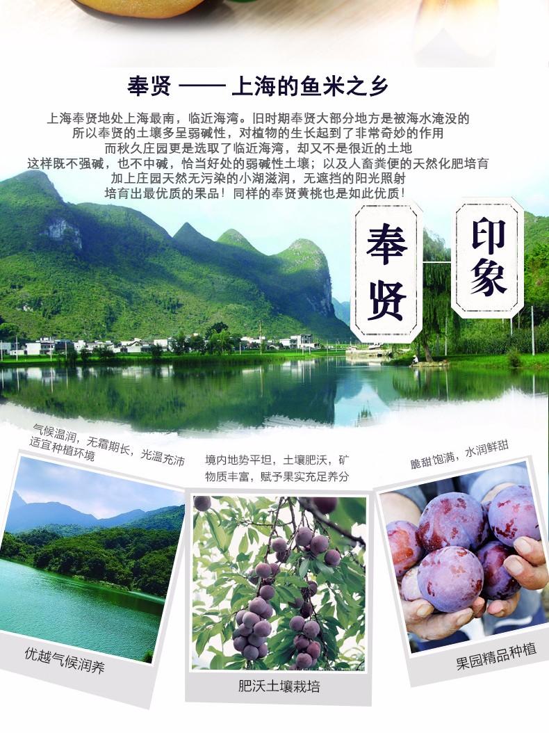上海鱼米之乡——奉贤