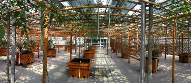 熱帶植物種植區4.jpg
