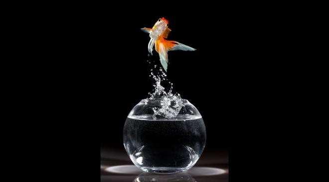 鱼缸会议-金鱼-01.png