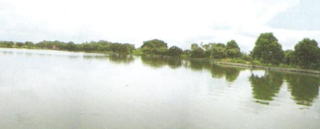 水产鱼塘3.jpg