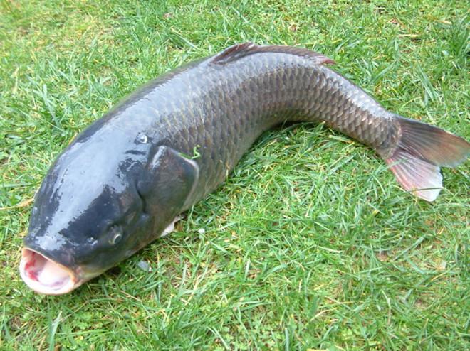 水产大头鱼1.jpg
