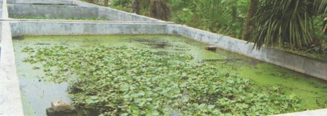 水产甲鱼池1.jpg