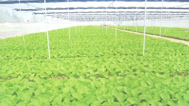 蔬菜1.jpg