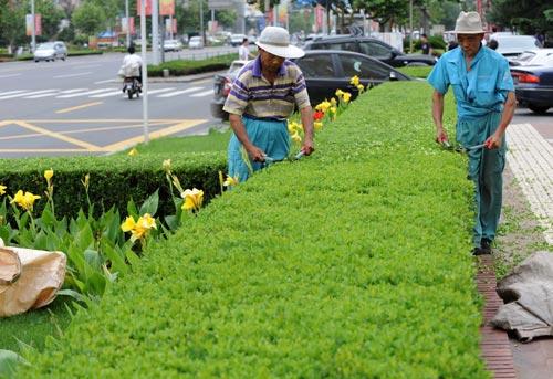 綠化養護.jpg