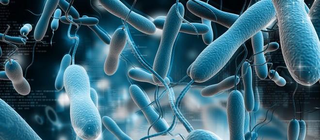 虫媒传染病15项病原体联合检测试剂盒-转曲.jpg