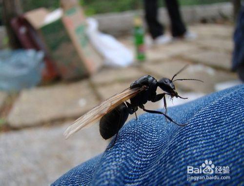 家中很多飞蚁怎么办
