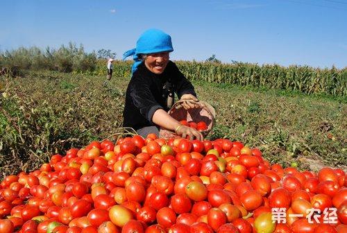 国务院:完善农民增收支持政策的四个明确要求